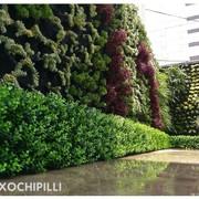 Muro verde natural