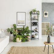 Salón estilo nórdico con muchas plantas