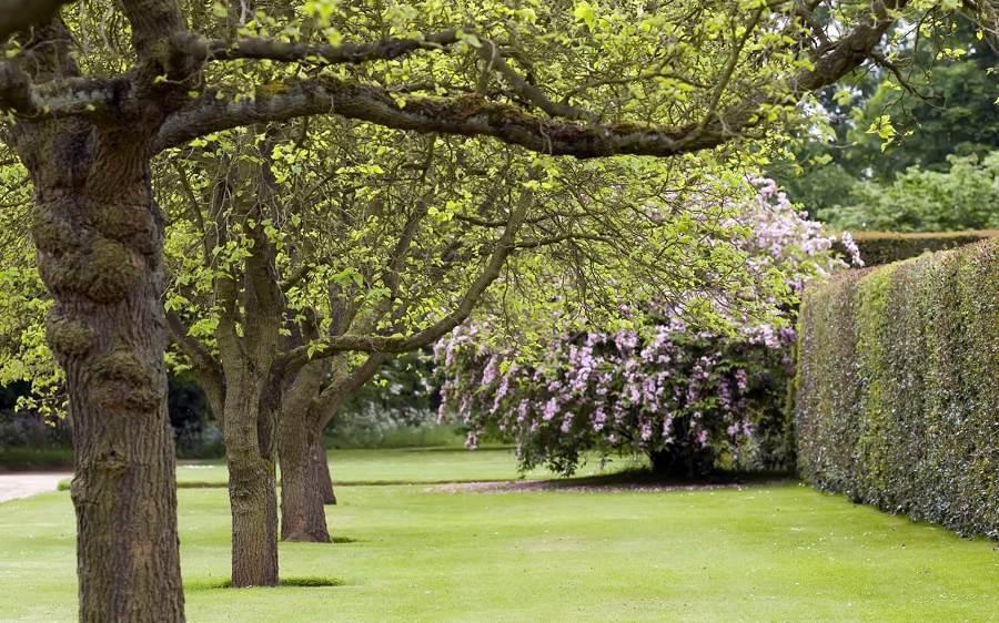 Árboles, plantas y pasto
