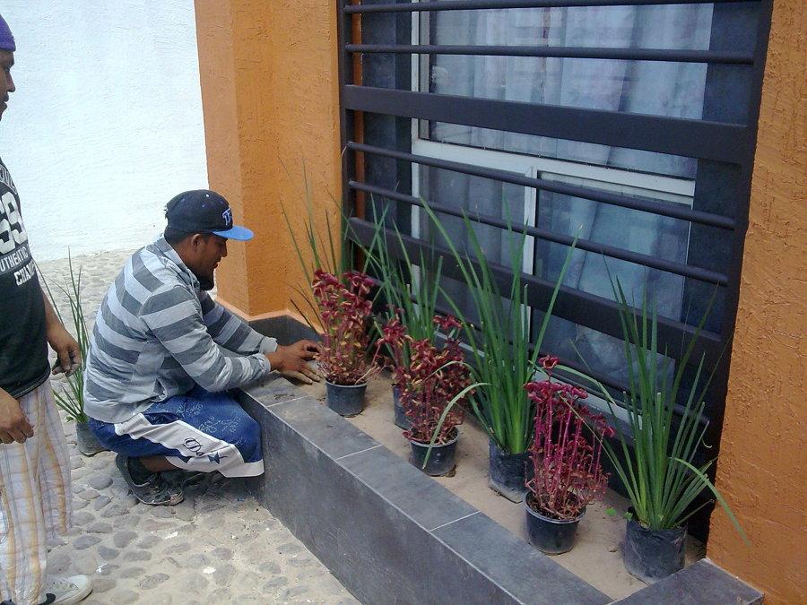 Foto armado de jardines finales de construcciones y for Armado de jardines