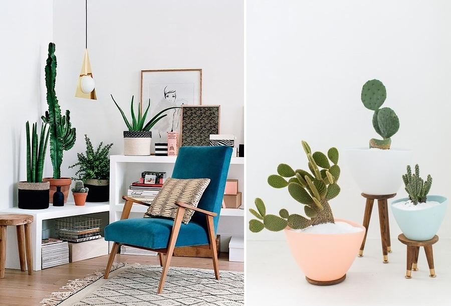 5 plantas de interior que no podr s matar ideas jardineros for Cactus para interior