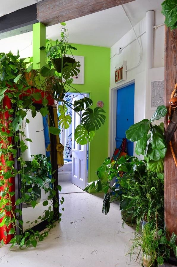 Combinación de plantas con Greenery