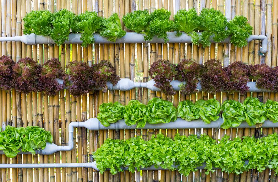Crea un huerto urbano a partir de un hueso de aguacate for El jardin urbano
