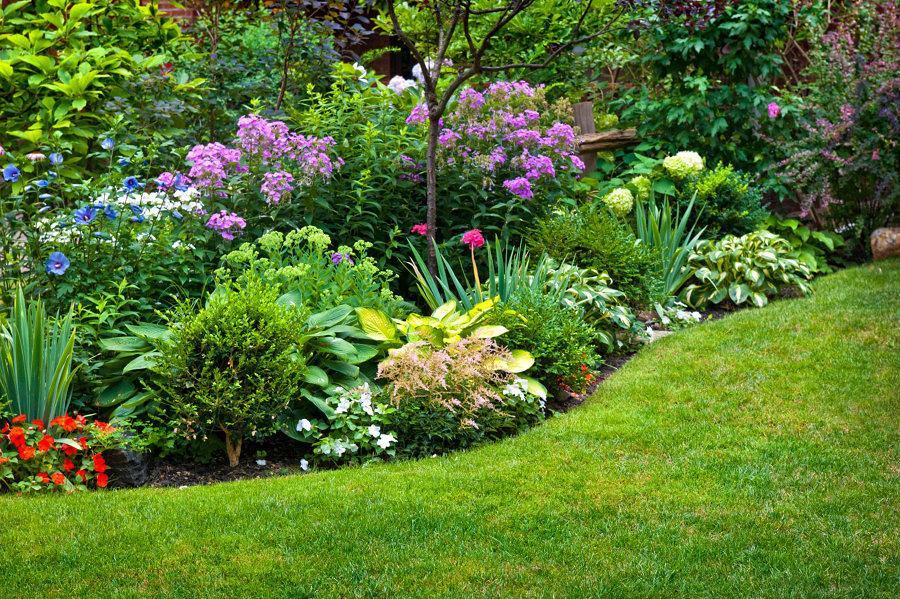Jardín con plantas y flores diversas