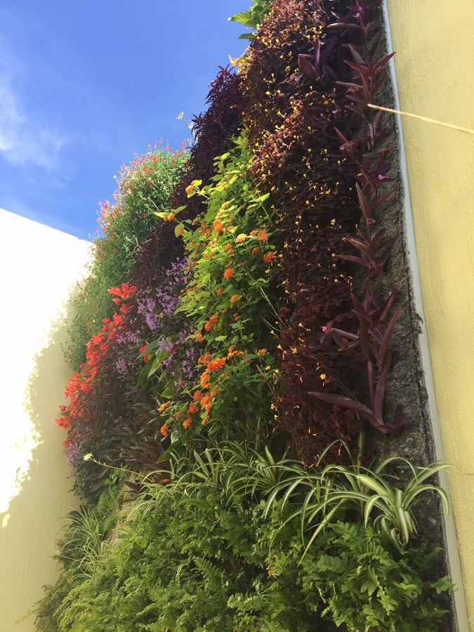 jardín vertical en exterior