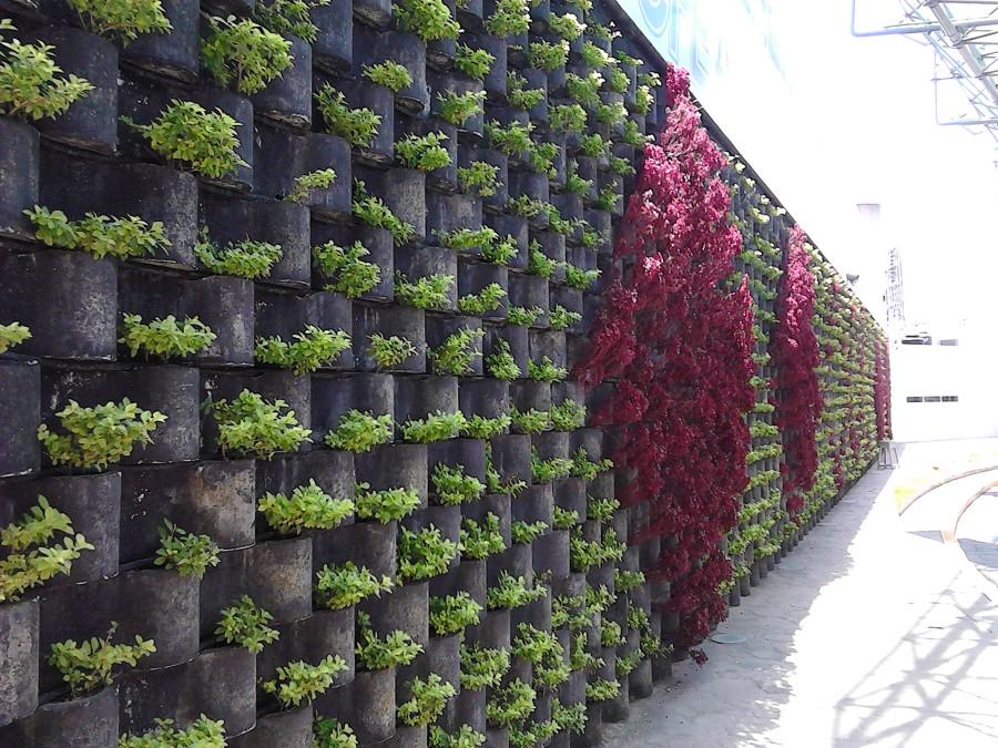 Foto jardin vertical floresta cfe de enfoque for Imagenes de jardin vertical