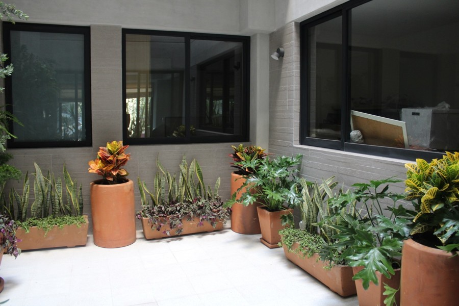 Jardineras en patio Interior.