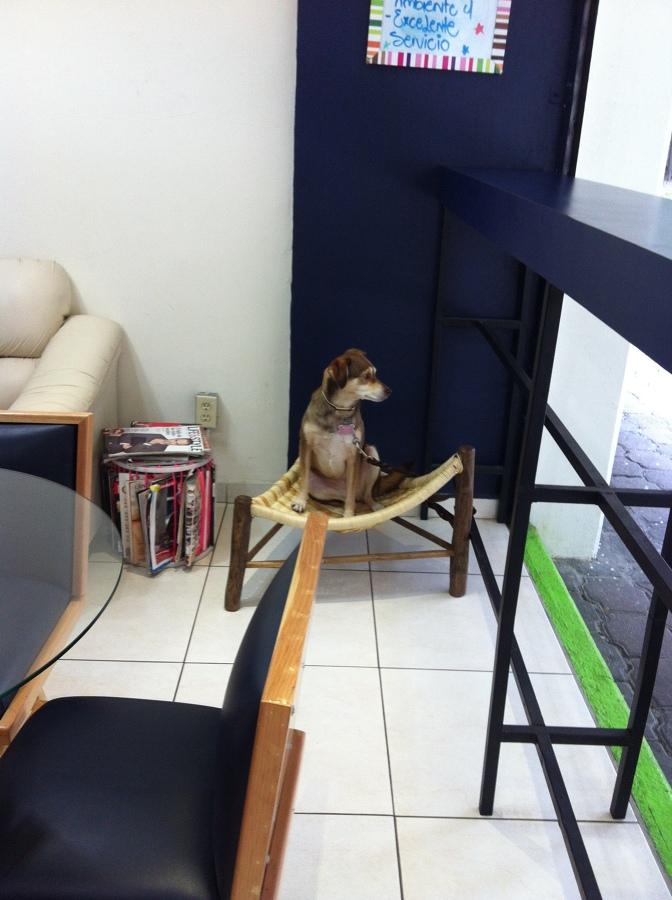 Mobiliario para mascotas