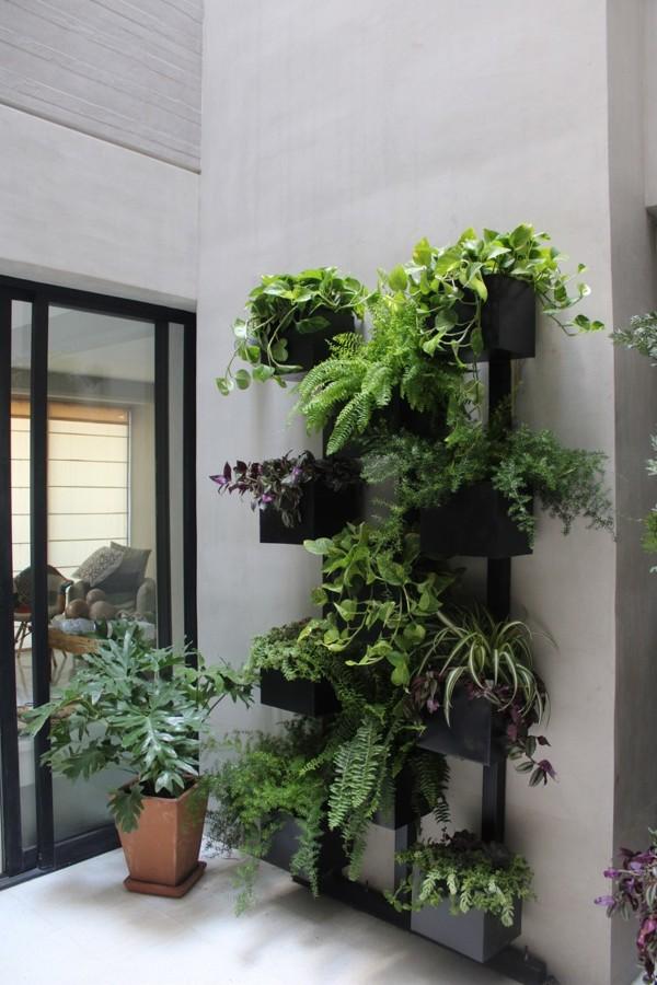 Muro verde natural.