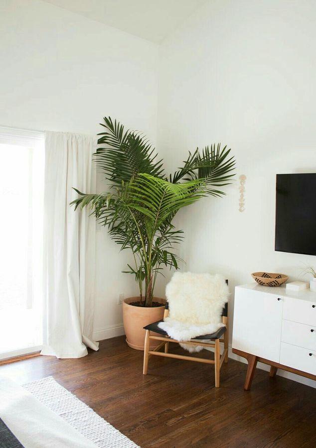 Palma areca decorativa en la sala