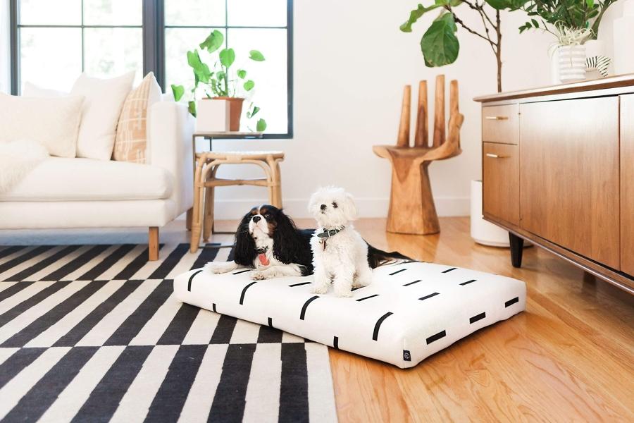 perritos en sala