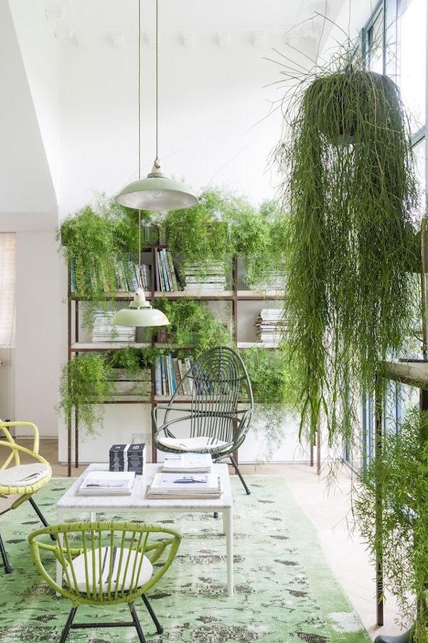 Casa con muchas plantas