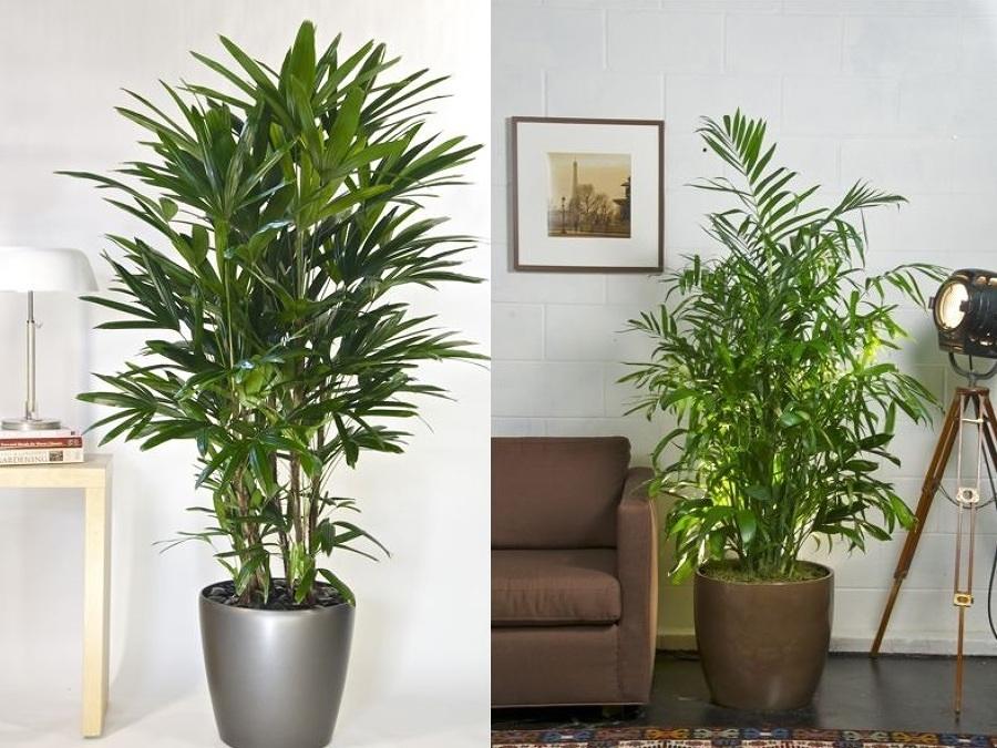 Planta de interior para poca luz infojardin holidays oo for Flores para interiores con poca luz