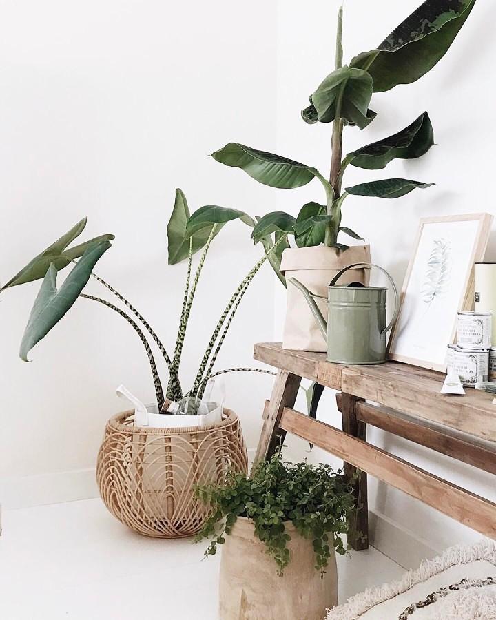 Foto decoraci n con plantas en interior casa 295582 for Plantas verdes de interior