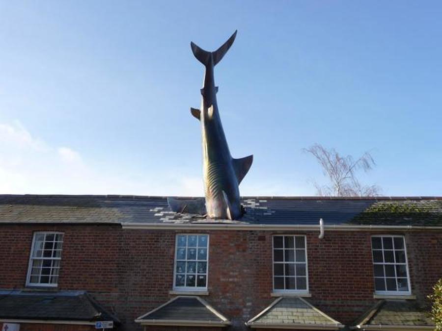 casa con tiburón