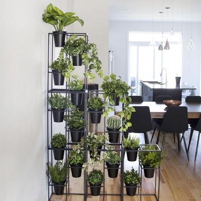 Plantas de otoño ¿Cuáles son y como cuidarlas?