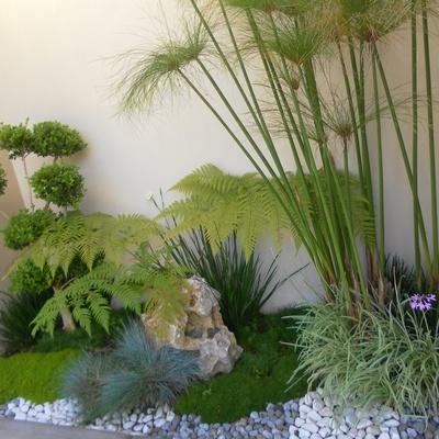jardin de acceso a casa