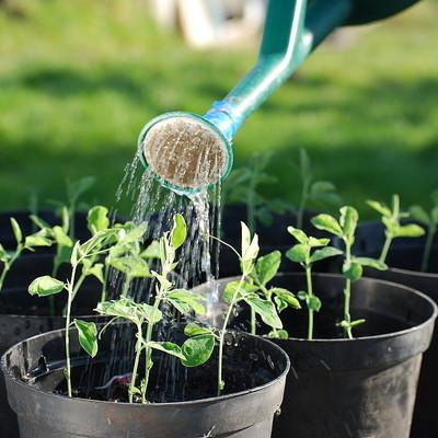 Crea tu propio huerto en casa y presume de jardín comestible