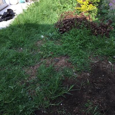 trabajos de jardineria