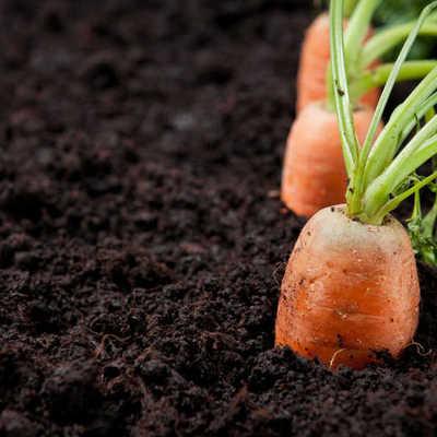 Verduras y hortalizas de otoño para sembrar en tu huerto urbano