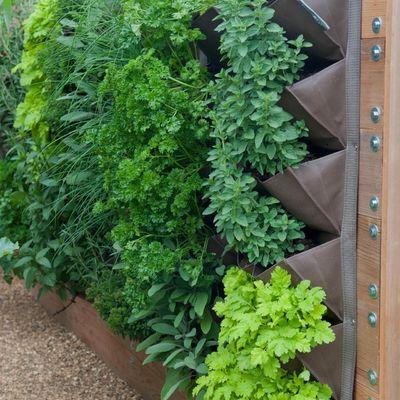 jardín vertical lleno de plantas