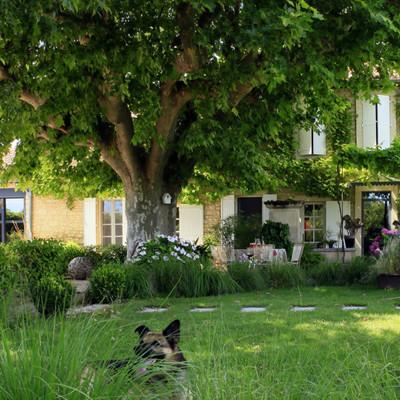 Jardín con árbol grande
