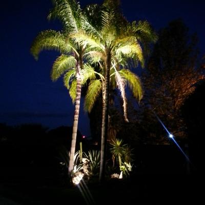 Av iluminaci n benito ju rez for Iluminacion para palmeras