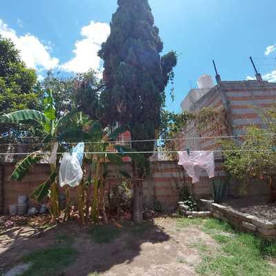 Derribar árbol de cipreses de 15 mts de altura