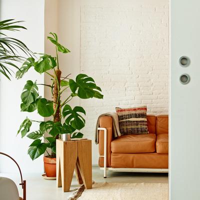 Sala decorada con plantas y tapete en el piso