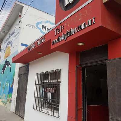 ESTÉTICA CANINA THE DOGFATHER ERMITA. REHABILITACIÓN DE MURO INTERIOR Y EXTERIOR