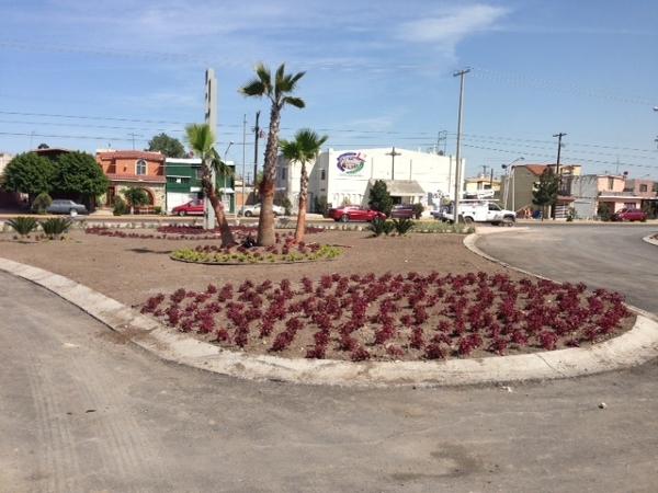 Foto jardineria residencial de viveros tamez de allende for Jardineria queretaro