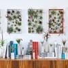 algunas-ideas-para-decorar-con-plantas-aereas-01-1024x576