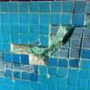 Desprendimiento De Azulejo Veneciano 5 X 5 cm