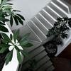 Escaleras de concreto