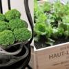 plants2-1024x764