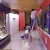 Remodelación Área Africana 17