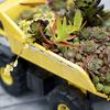 Succulent_Truck