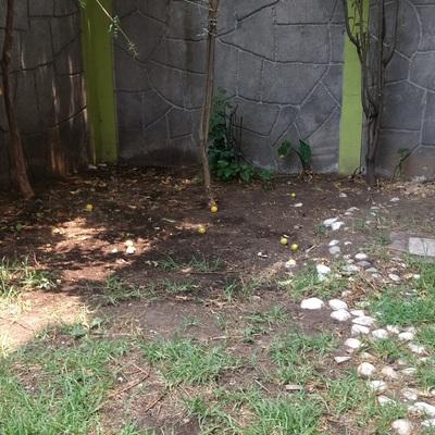 Mantenimiento general san lorenzo la cebada xochimilco for Jardineros en xochimilco