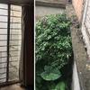 Desmontar dos ventanales, emboquillar y sellar espacio superior entre bardas colindantes