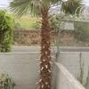 Remover palmera de 5m