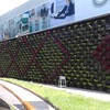 Construcción de muros verdes