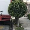 Pequeños Trabajos Jardinería
