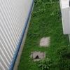 Mantenimiento de jardín (poda)