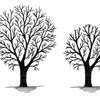 Reducción de copa de árbol