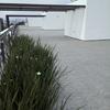 Remodelar roof garden