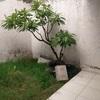 Cotización de remodelación de terraza