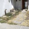 Limpiar jardin