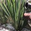 Otros Trabajos Jardinería