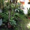 Enredar y trasplantar  jardín,  trabajos jardinería aprox. 2. 50 x 3. 50