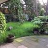 Jardinero para dar mantenimiento a jardín de casa